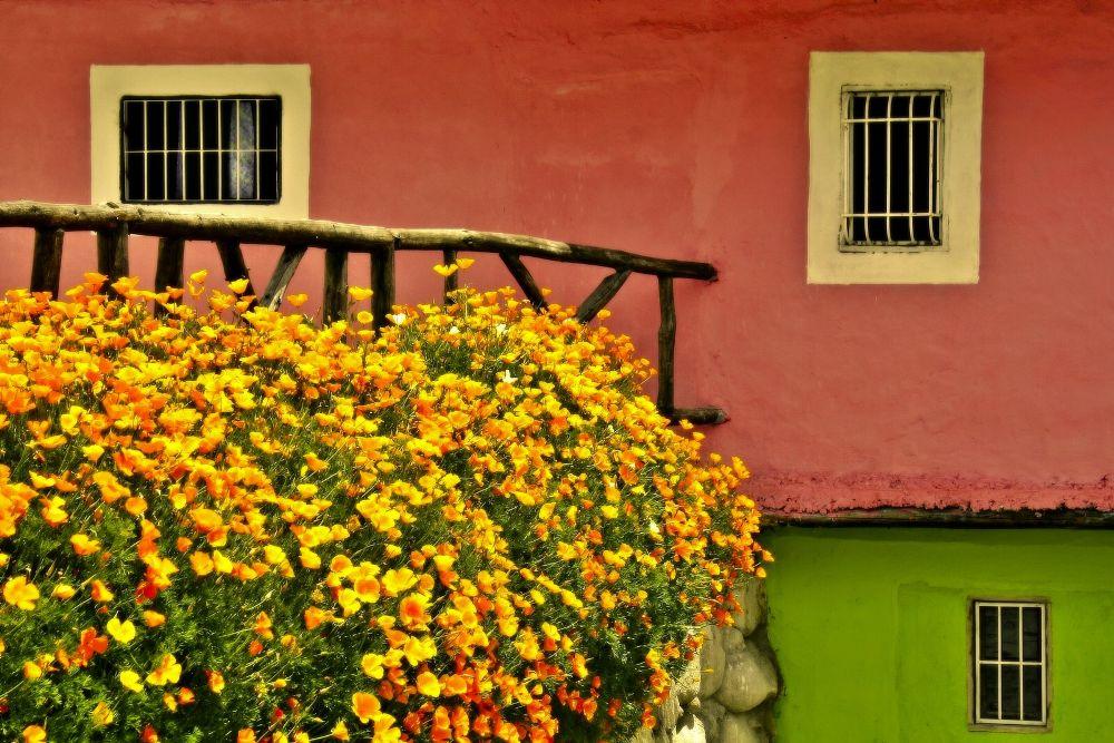 Photo in Street Photography #windows #house #venezuela