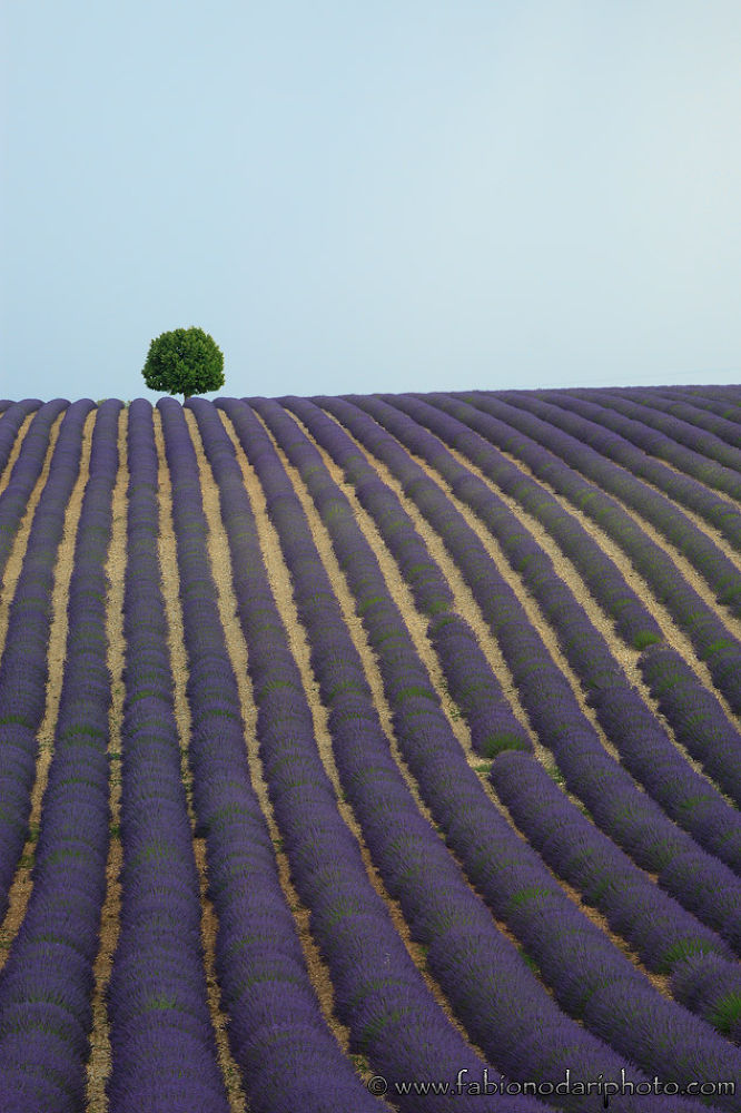 Photo in Landscape #valensole #provence #provenza #france #ypa2013 #fabionodariphoto #lavender #long exposure