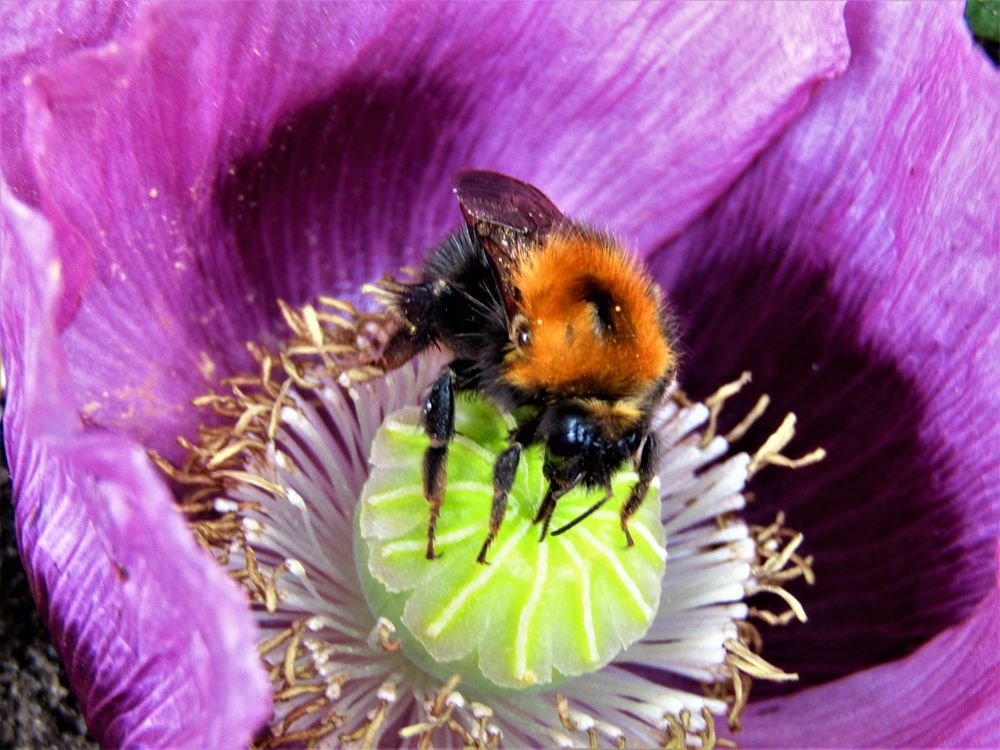 Photo in Nature #bee #in flower #nectar
