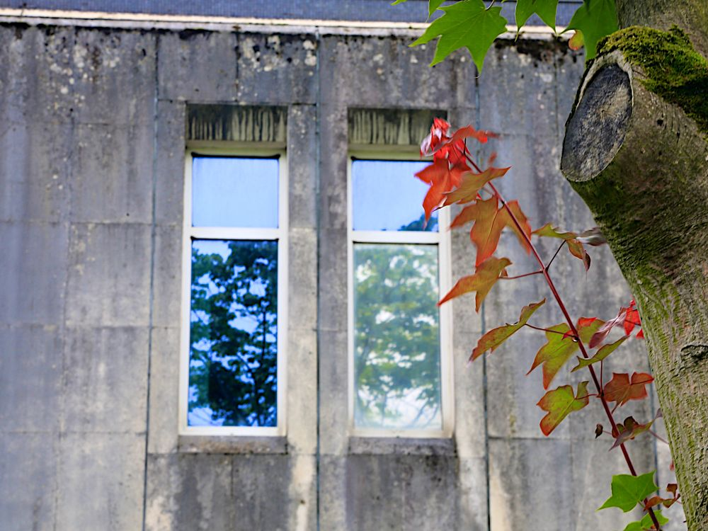 Photo in Nature #leaves #tree #windows #reflection #concrete