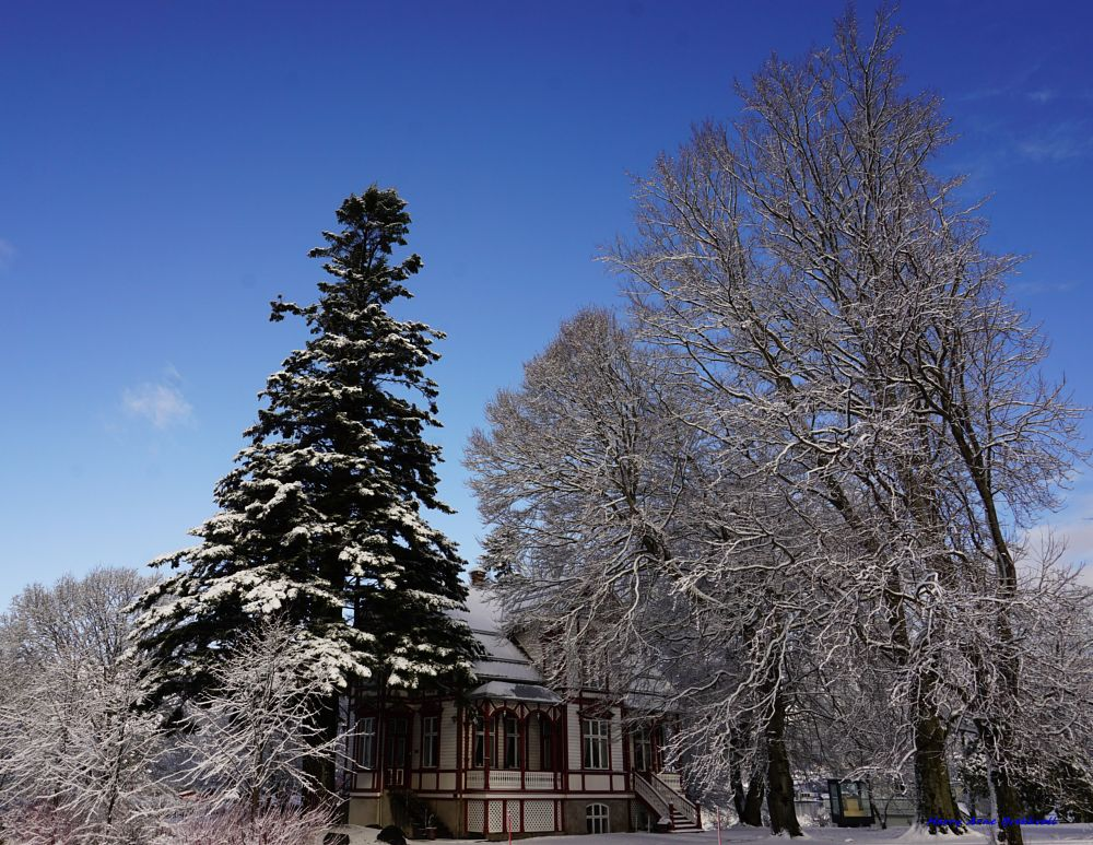 Photo in Architecture #cafe #trees #snow #blueskies