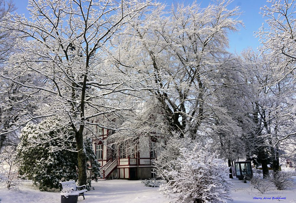 Photo in Nature #snow #cafe #building #trees