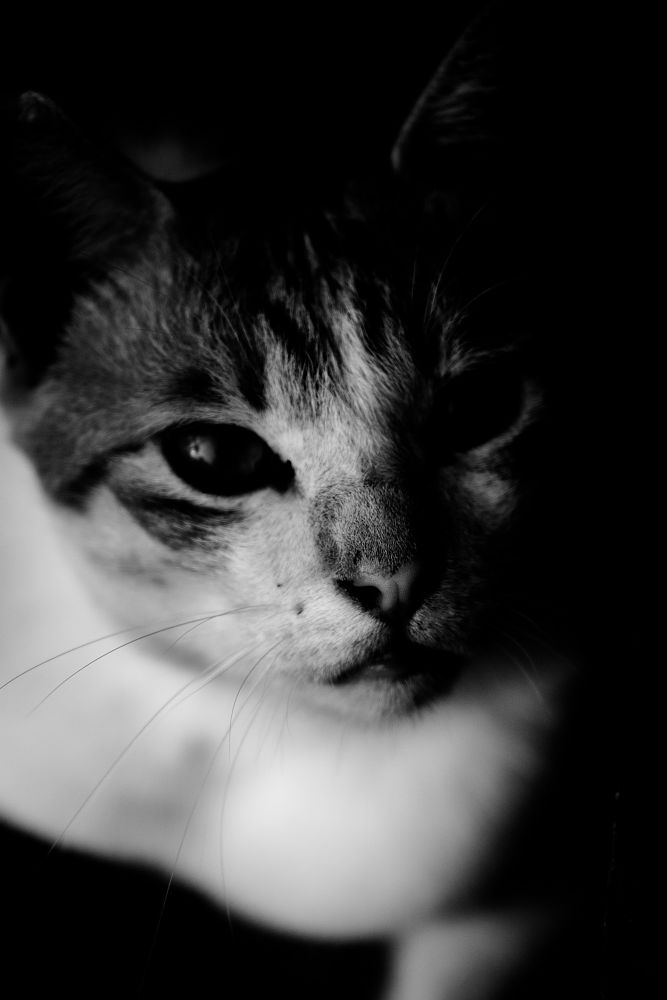 Photo in Black and White #cat #face