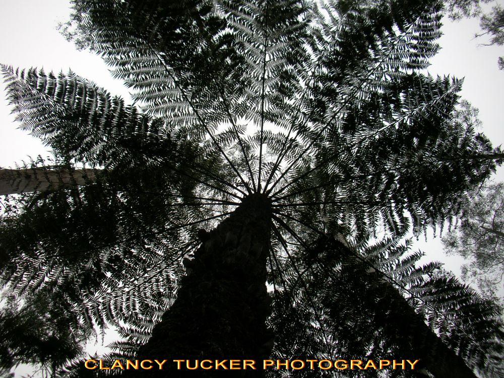 Photo in Nature #trees #tree fern #australia #nature