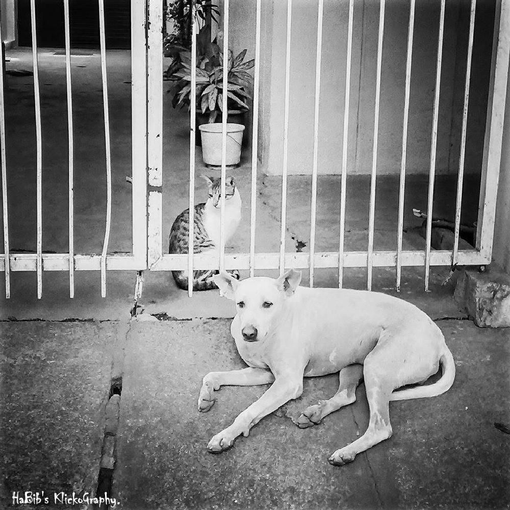 Photo in Animal #do #dog #cat