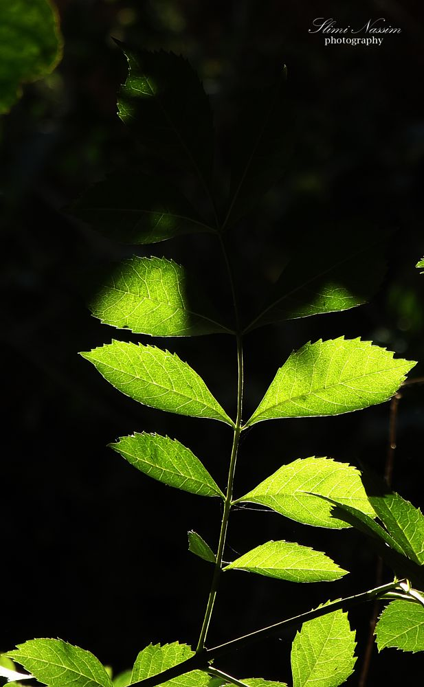 Photo in Nature #leafs #leaf #leaves #green #nature #natural #color #black #shadow #low key #lowkey #colorful #garden #wildlife #wild #algerie #jardin #floral #flora #flower