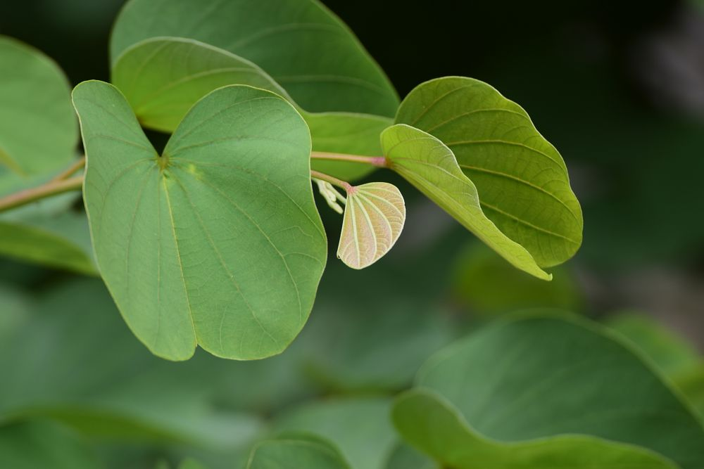 Photo in Nature #green #nikon #beauty