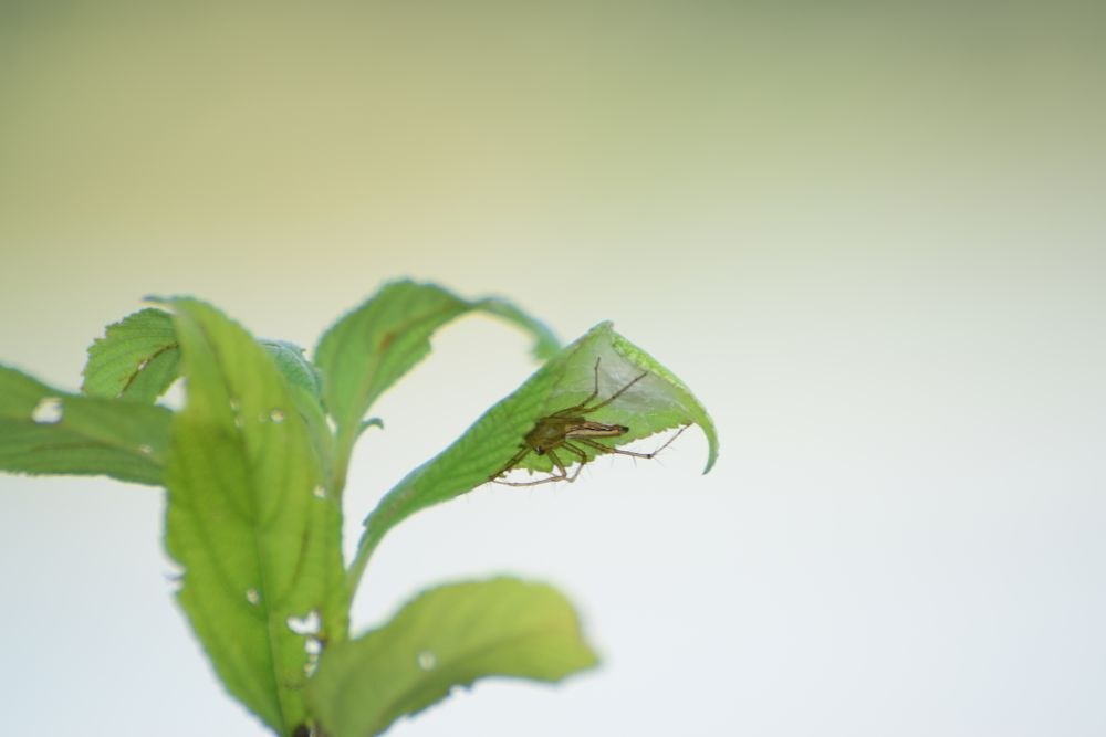 Photo in Nature #insect #green #leafe #nikon