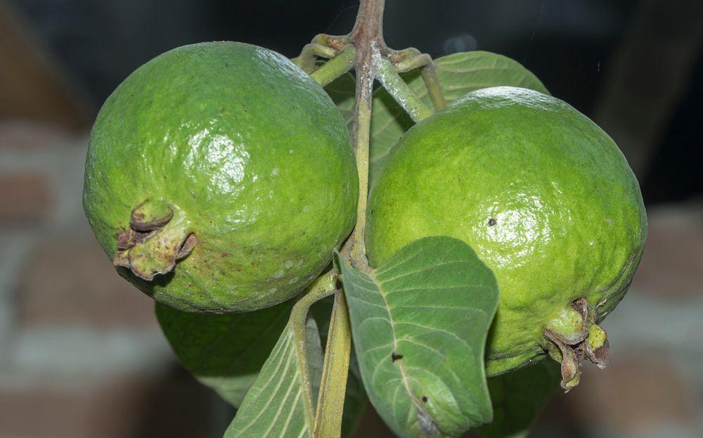 Photo in Food #peyara #d7200 #nikon #fruits