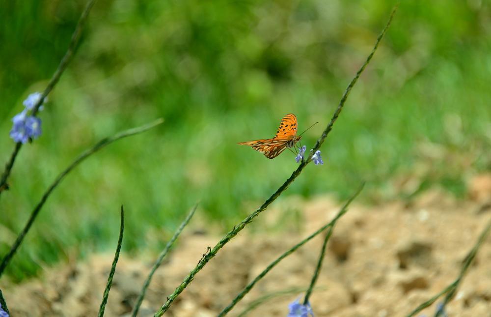 Photo in Fine Art #borboleta #campo #verde