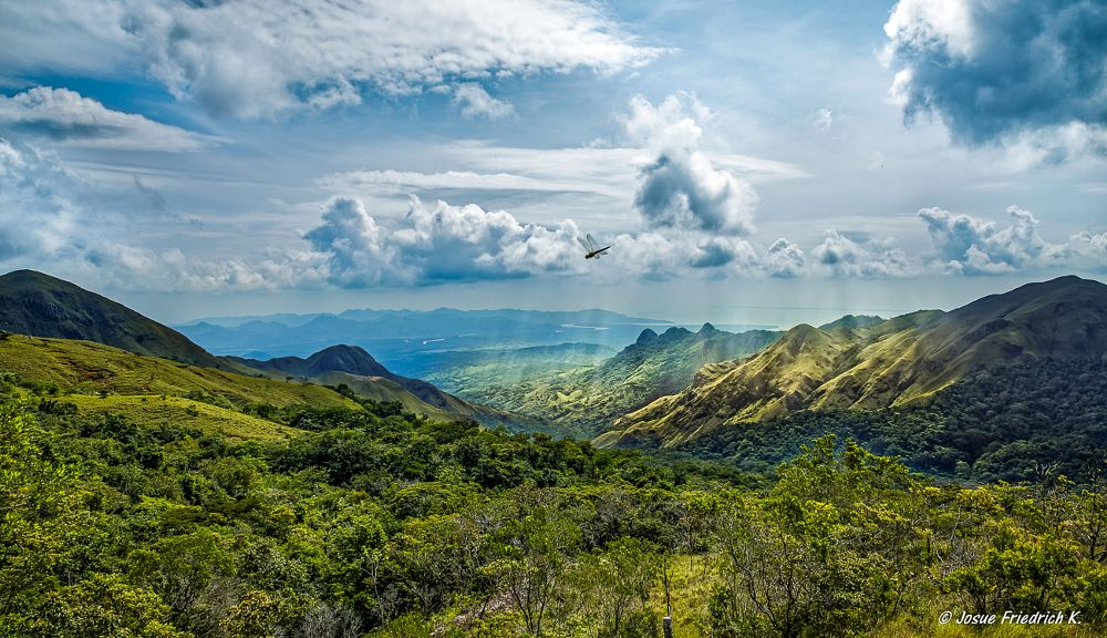Photo in Nature #national park #forest #green #trees #summer #panama #republic of panama #panama canal #pacific ocean #mountains #dragonfly #libelula #parque nacional #tropical #rainforest #water #sajalices