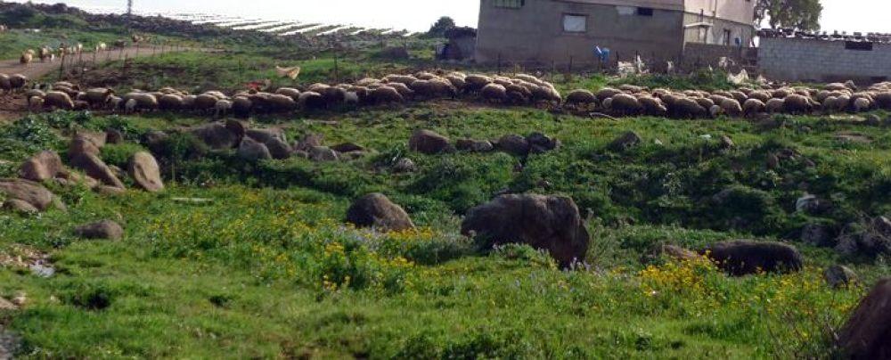 Photo in Animal #sheep #stones #nature #wazani