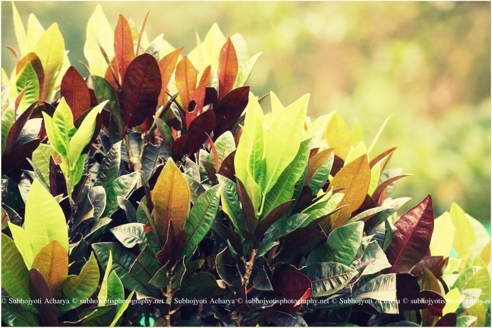 Photo in Nature #nature #environment #leaves