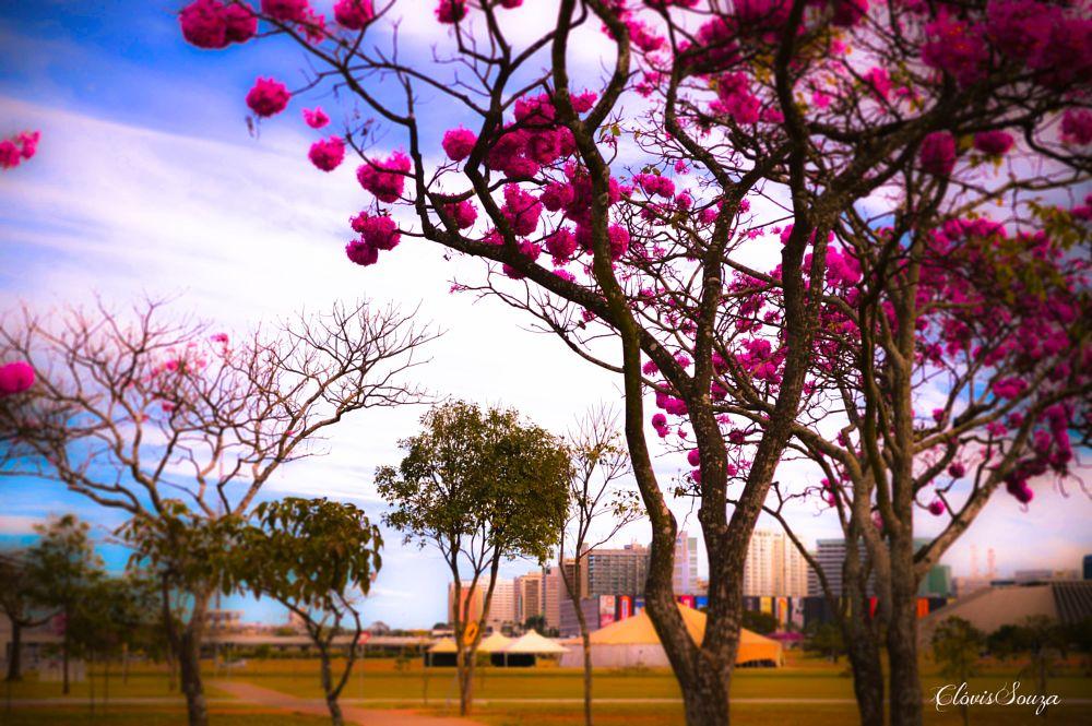 Photo in Random #flores #parque #jardim