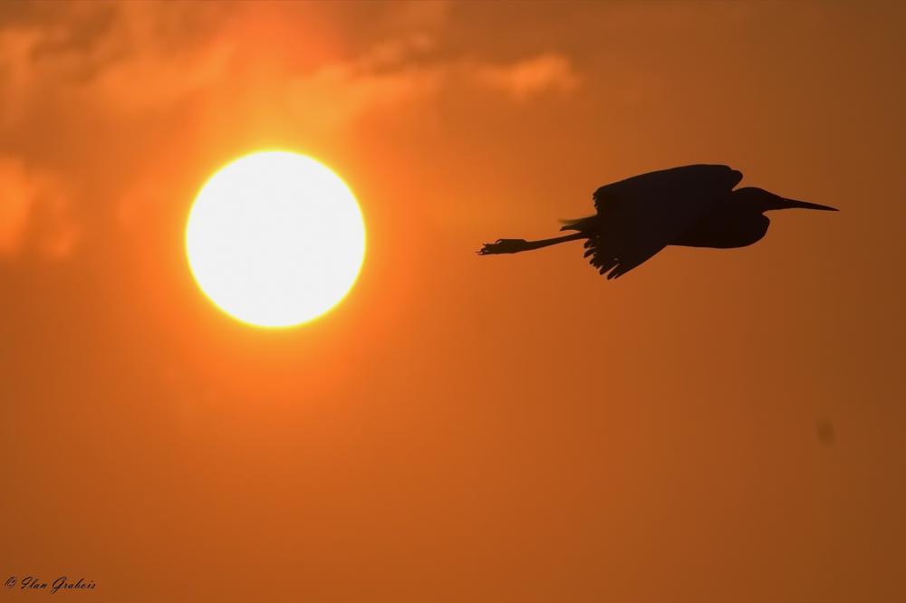 Photo in Nature #sunrise #sun #bird #nature