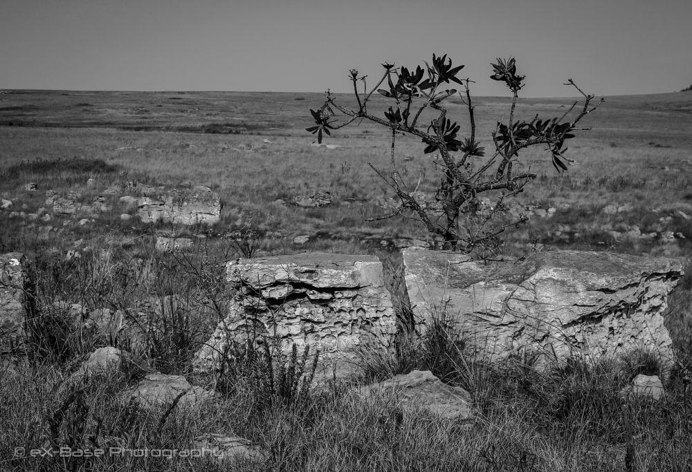 Photo in Landscape #rock #shrub #grass