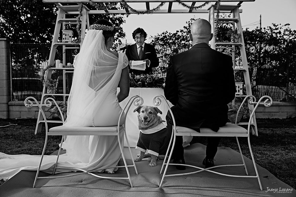 Photo in Wedding #mascota #boda #pareja #casamiento #novios
