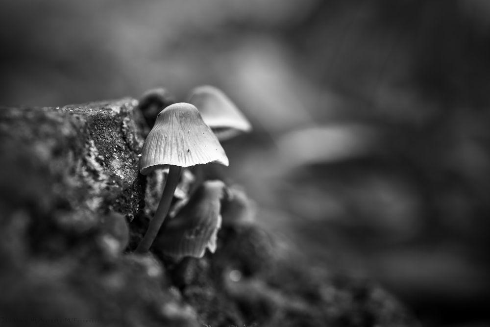 Photo in Black and White #mushroom #nature #b/w #blicklinie