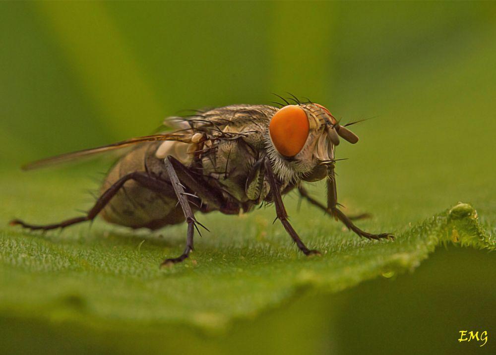 Photo in Macro #iluminación  mosca  fotografía