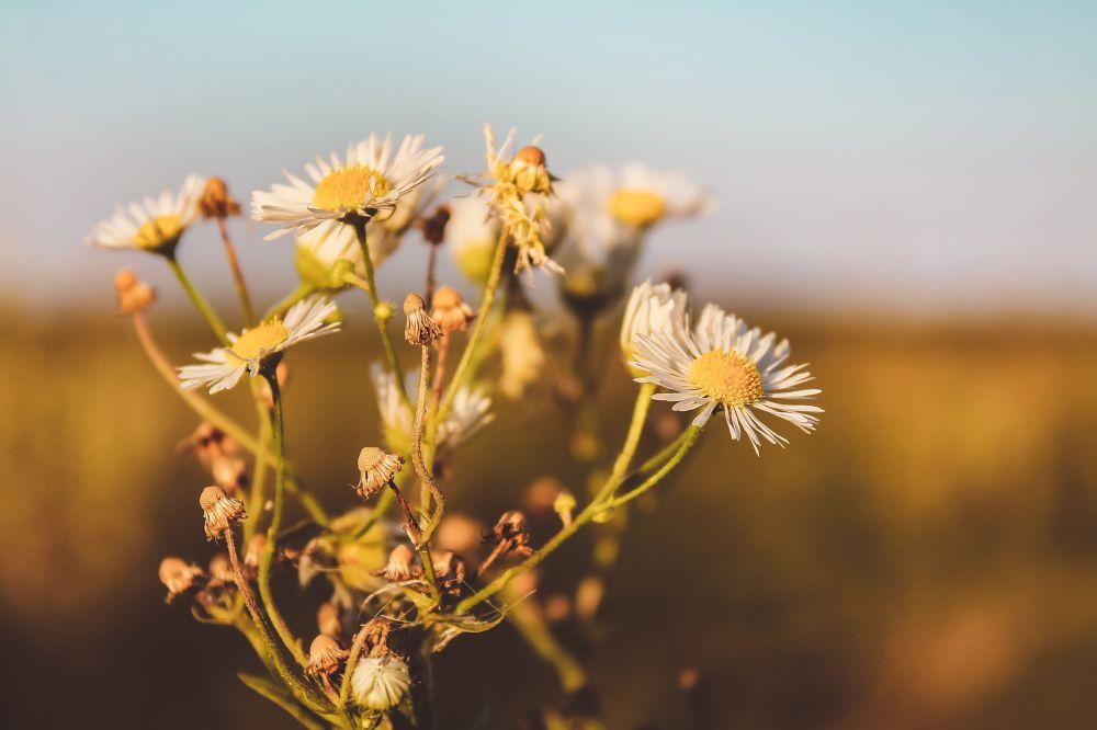 Photo in Nature #flower #summer #yellow #orange #canon #1100d #summery #ukraine
