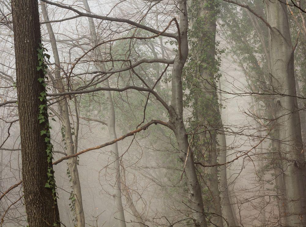 Photo in Nature #wood #helios 44m #croatia