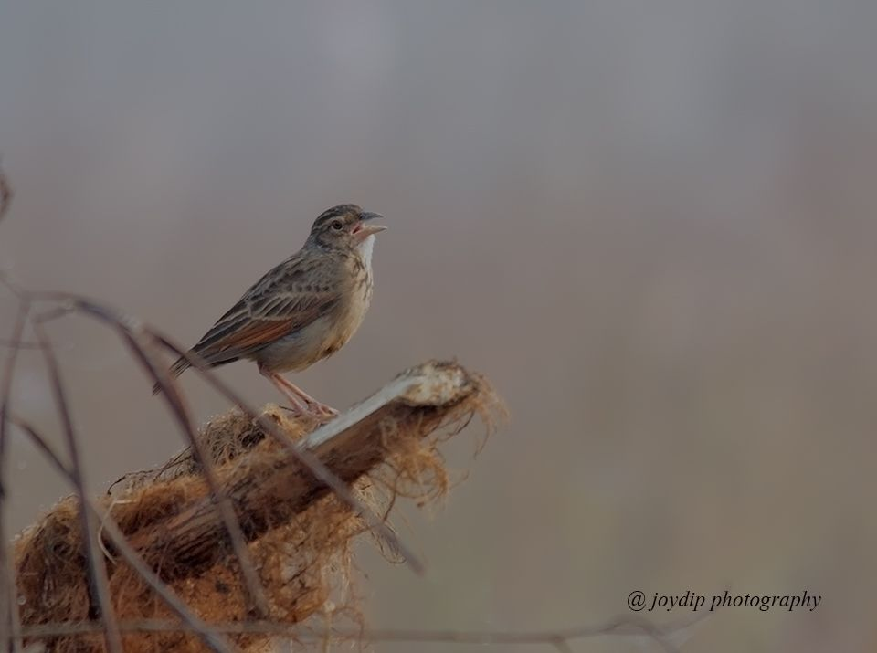 Photo in Nature #birds canon wild photography n