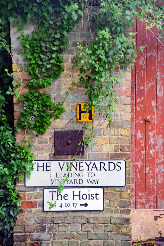 Photo in Abstract #the vineyard #abstract