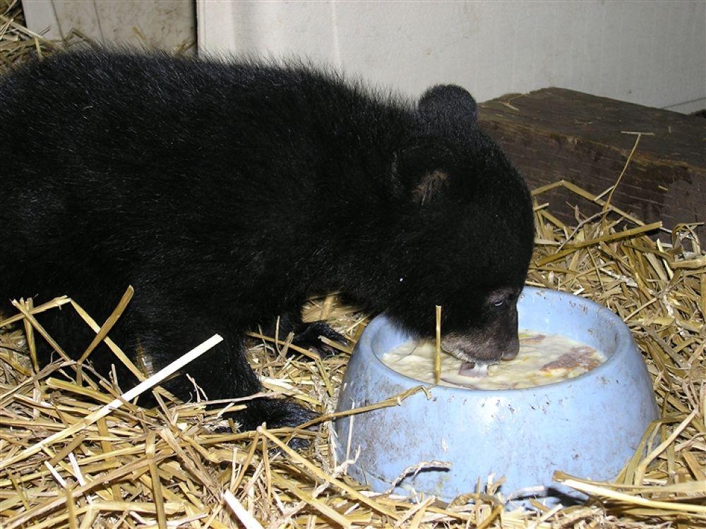 Photo in Random #www.bearwithus.org