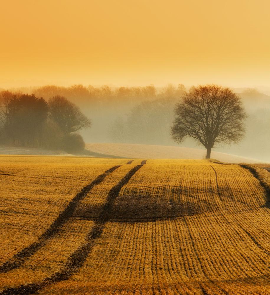 Photo in Landscape #mist #spring #morning #landscape #jan neumann