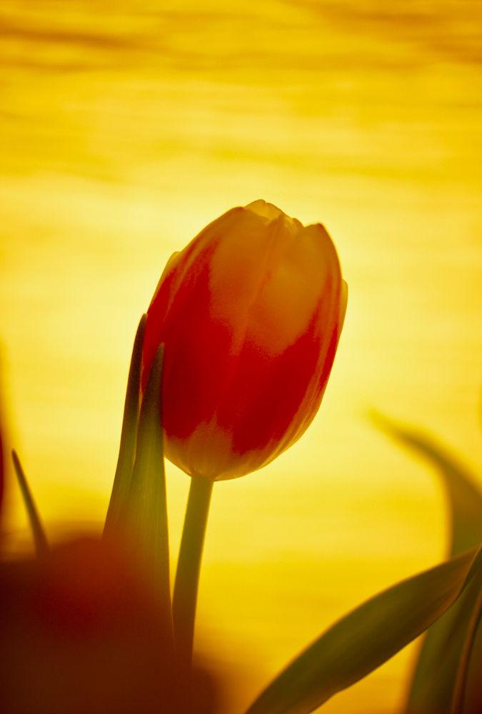 Photo in Nature #flower #macro #nature #jan neumann