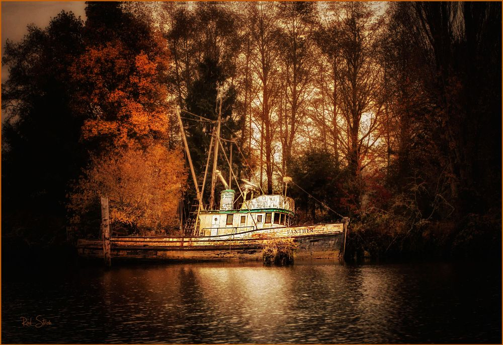Photo in Fine Art #shipwreck #swamp #boat