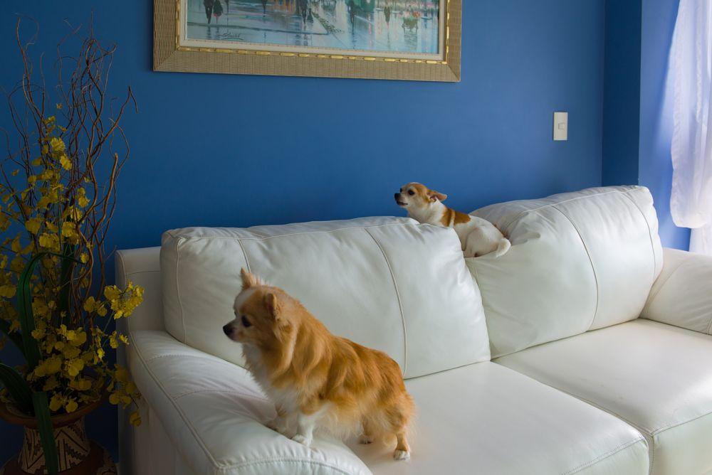 Photo in Animal #dogchihuahuadogloversanimal
