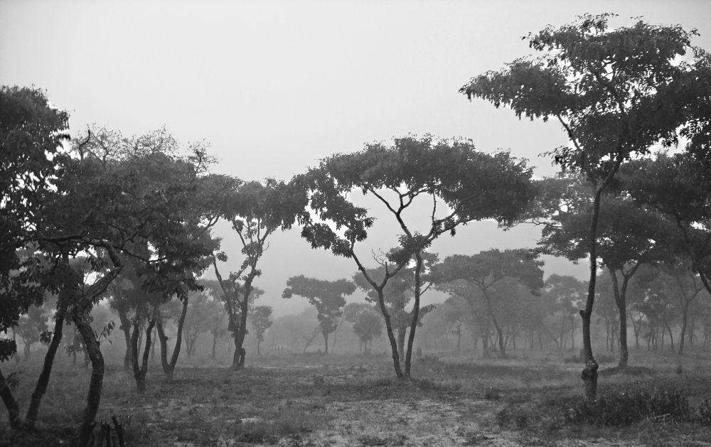 Photo in Landscape #fog #nature #landscape #balck & white #beautiful