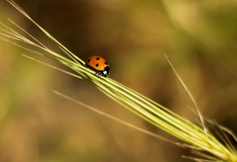Photo in Nature #macro #insect #animal #plants #nature
