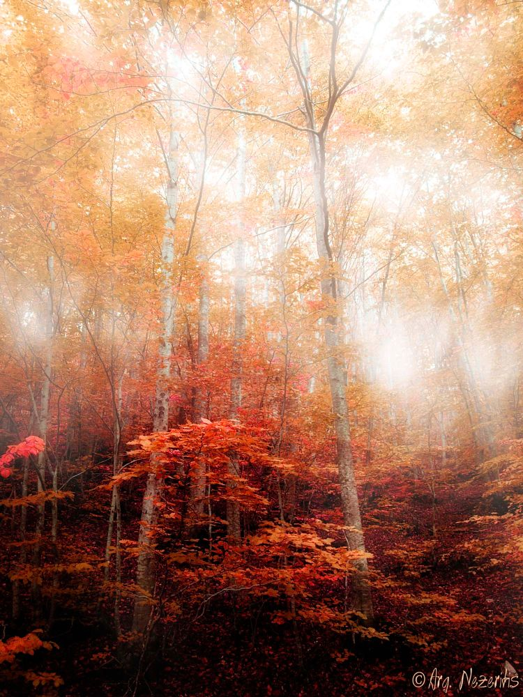 Photo in Fine Art #fine art #forest