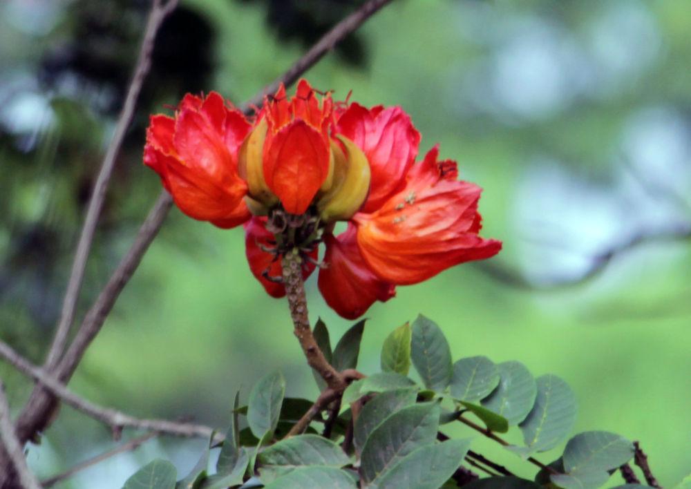 Photo in Nature #bhubaneswar