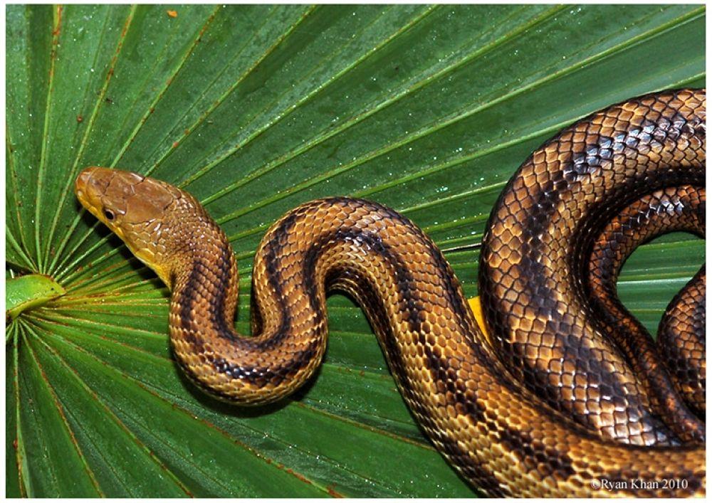 Photo in Random #snake