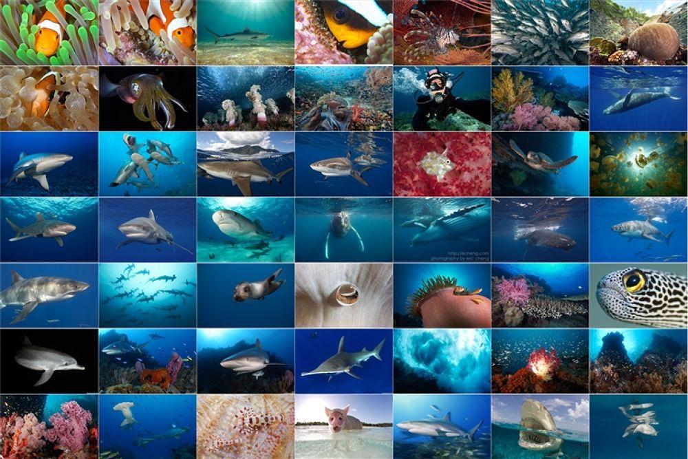 Photo in Underwater #underwater