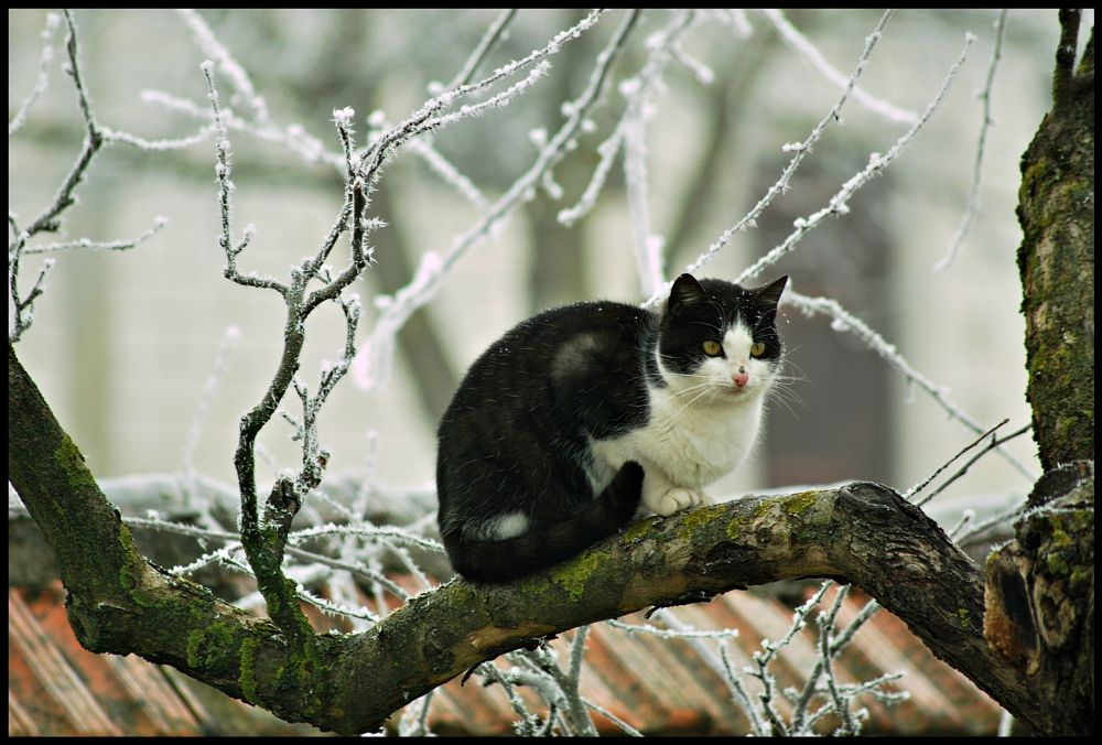 Photo in Animal #animal #winter #nature #cold