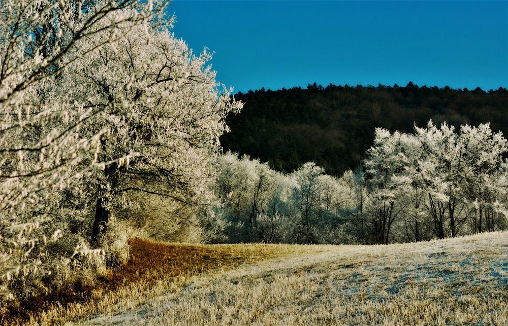 Photo in Landscape #winter #colors #sun #nature #landscape