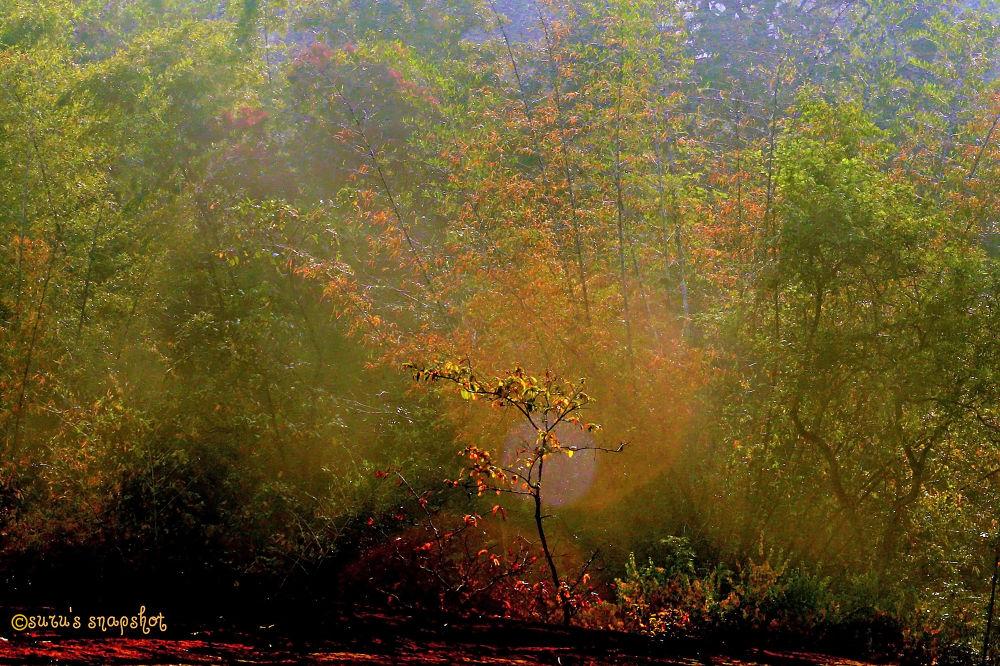 Photo in Random #light #devine #nature #trees #rays #flowers