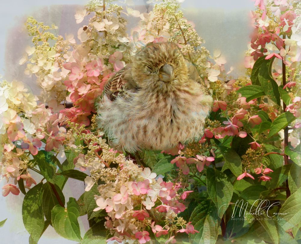 Photo in Random #birds #sparrow #flowers #beauty