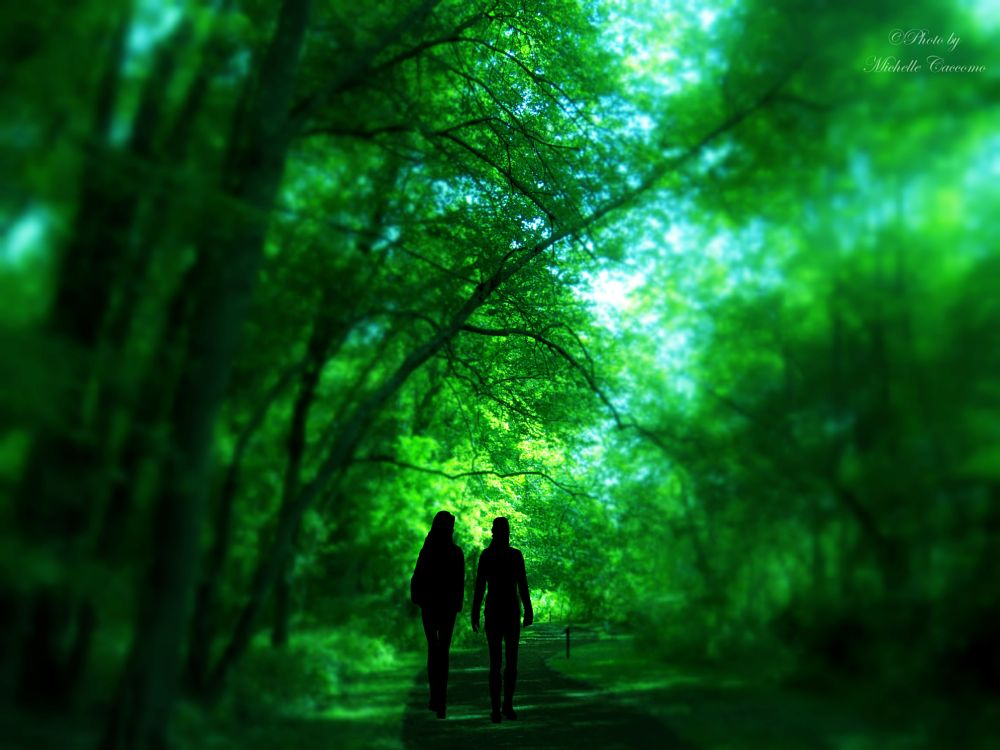 Photo in Random #woods #forests #beauty #nature #silhouettes #dirt road