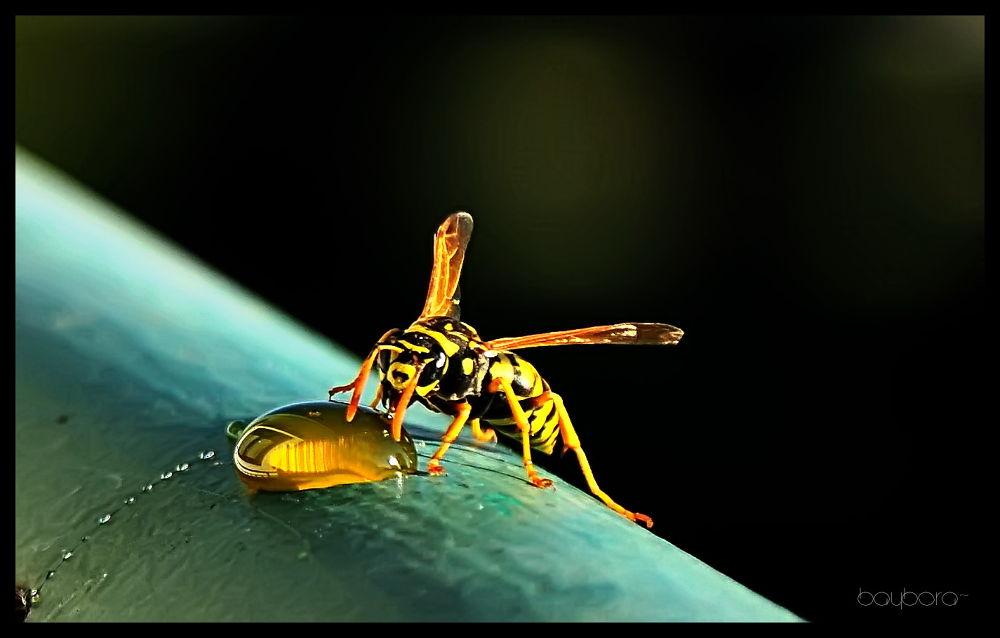 Photo in Animal #horney #honey #macro