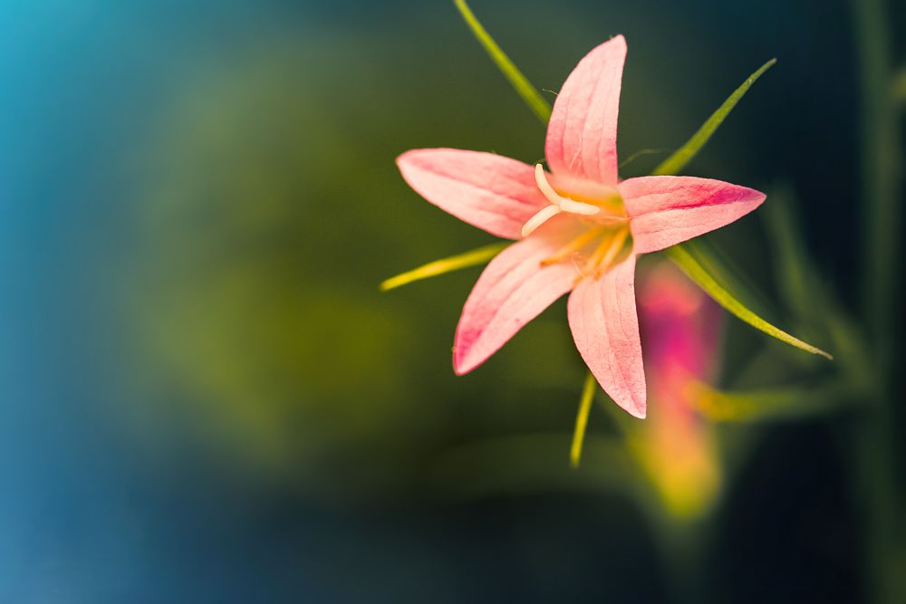 Photo in Nature #flower #flowers #garden #nature #natural #dof #macro #detail #close #purple #pink #green