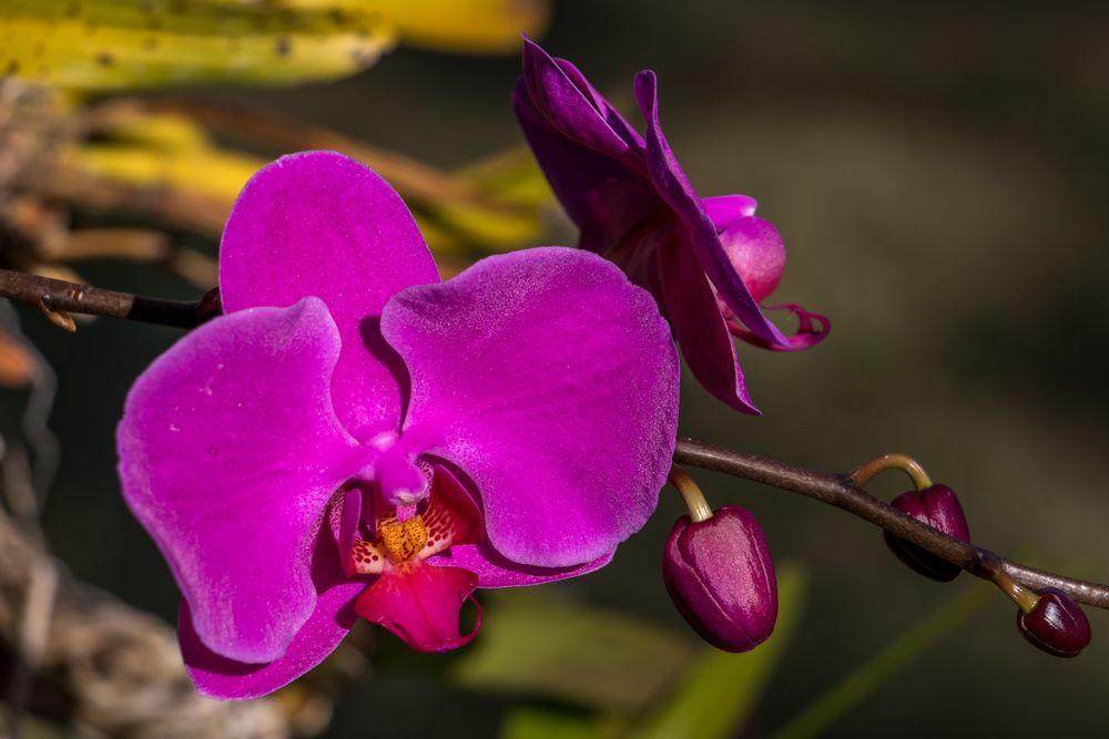 Photo in Nature #natureza #flores #cores