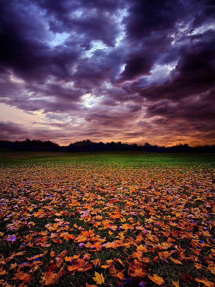 Photo in Random #leaves #trees #fall #color #autumn #landscape #sky #sunrise #sunset #twilight #wisconsin #horizon