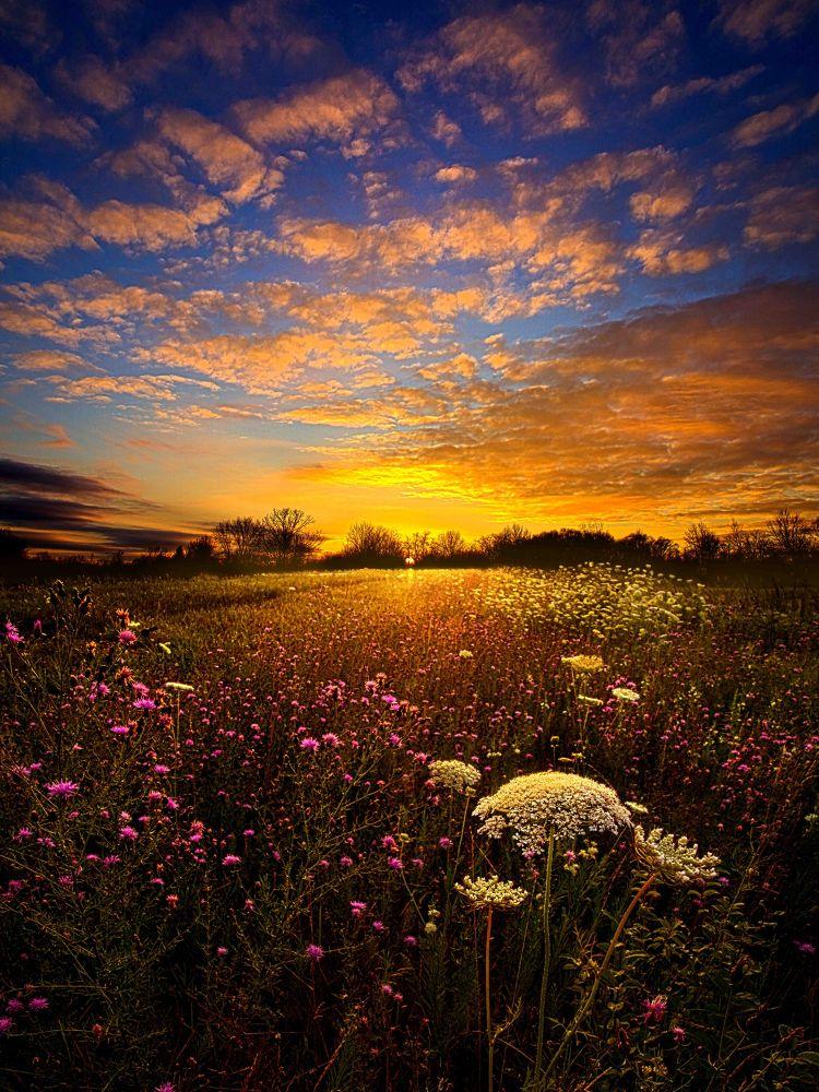 Photo in Landscape #nature #landscape #sunrise #sunset #view #vista #srene #peace #wild flower #meadow #wisconsin #horizons #phil koch