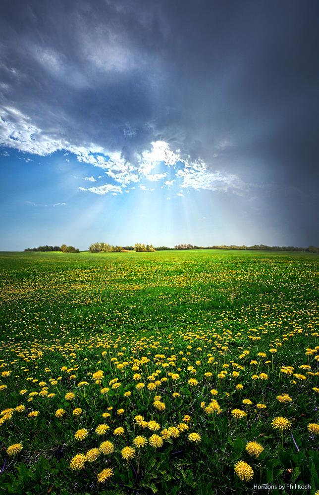 Photo in Landscape #landscape #nature #meadow #field #sky #sun #light #dandeelions #spring #grass #horizons #wisconsin