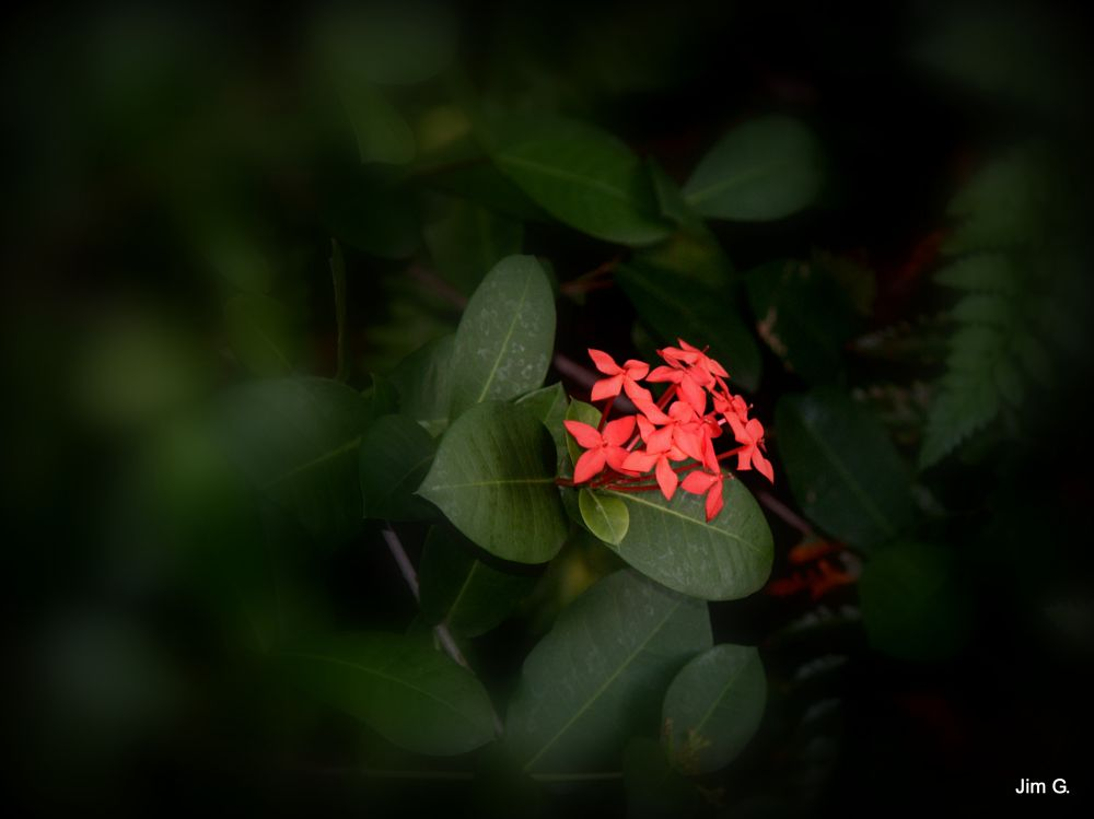 Photo in Nature #flowers #blooms #red